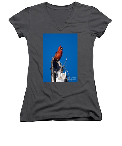 Cardinal On Honeymoon Island Women's V-Neck (Athletic Fit)