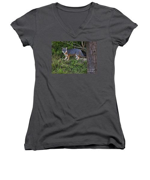 Channel Island Fox Women's V-Neck T-Shirt (Junior Cut) by David Millenheft