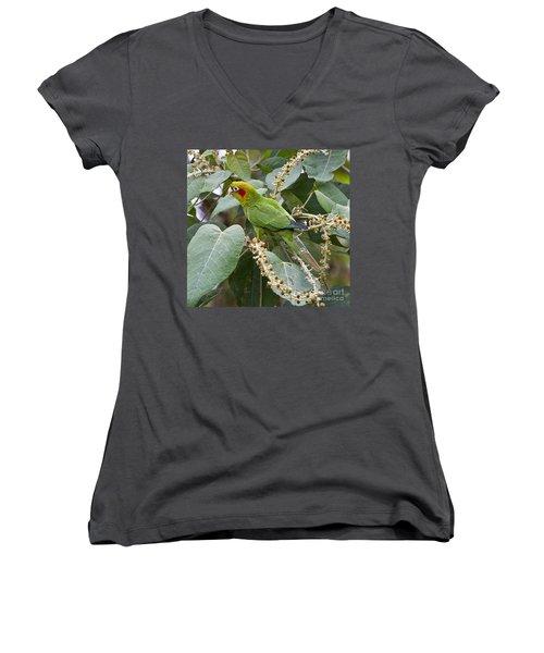 Chiriqui Conure 2 Women's V-Neck T-Shirt (Junior Cut) by Heiko Koehrer-Wagner