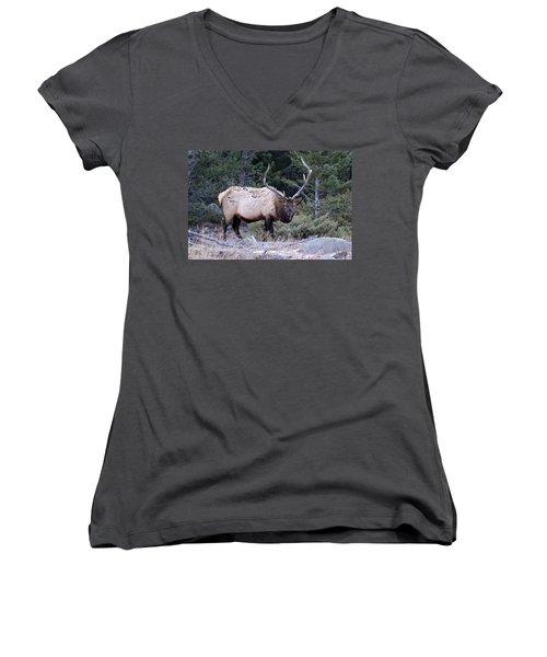 Colorado Bull Elk Women's V-Neck