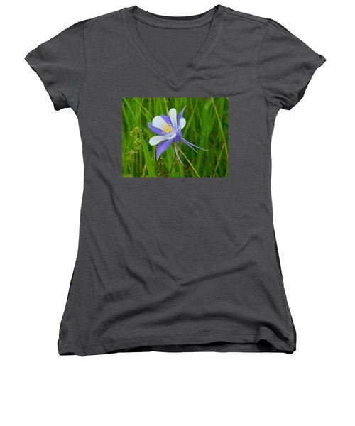 Colorado Columbine Women's V-Neck T-Shirt (Junior Cut) by Dan Miller