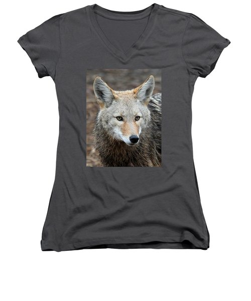 Women's V-Neck T-Shirt (Junior Cut) featuring the photograph Coyote by Athena Mckinzie