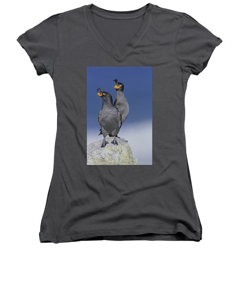 Crested Auklet Pair Women's V-Neck T-Shirt (Junior Cut) by Toshiji Fukuda