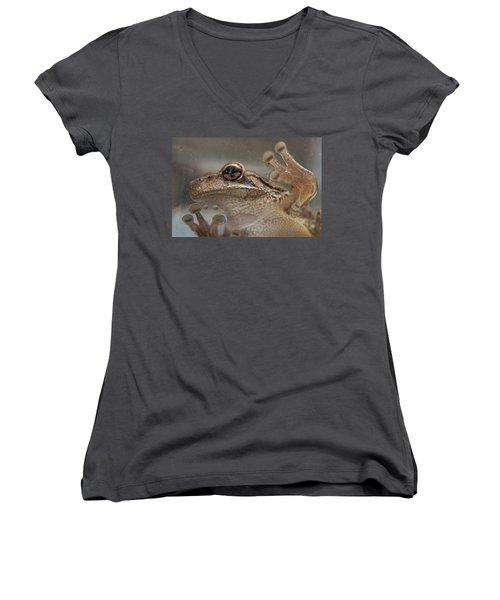 Cuban Treefrog Women's V-Neck T-Shirt (Junior Cut) by Paul Rebmann