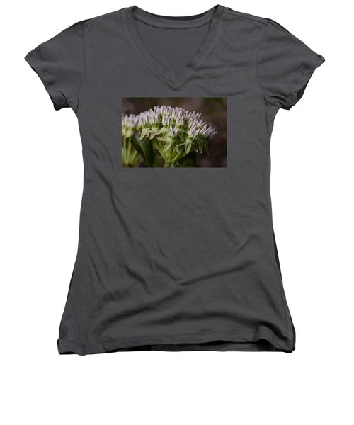 Women's V-Neck T-Shirt (Junior Cut) featuring the photograph Curtiss' Milkweed #3 by Paul Rebmann