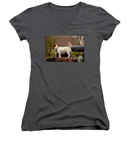 Cute Dog On Carriage Seat Bruges Belgium Women's V-Neck T-Shirt