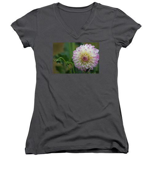 Dahlia In The Mist Women's V-Neck T-Shirt