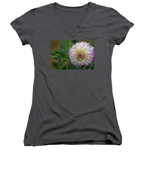 Dahlia In The Mist Women's V-Neck T-Shirt (Junior Cut) by Jeanette C Landstrom
