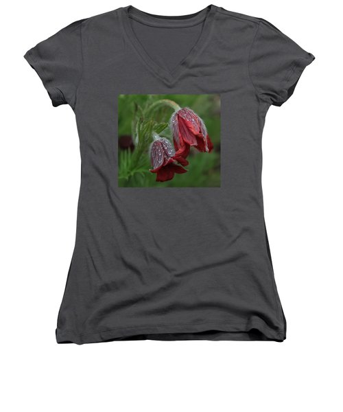 Dew Covered Pasque Flower Women's V-Neck T-Shirt