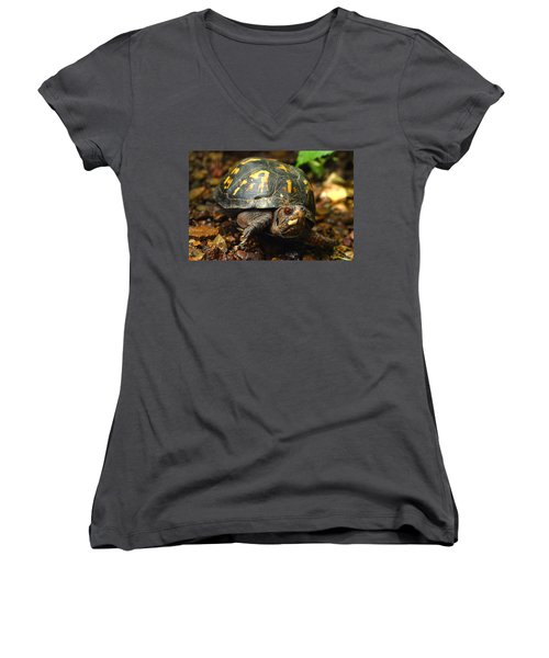 Eastern Box Turtle Women's V-Neck T-Shirt (Junior Cut) by Michael Eingle
