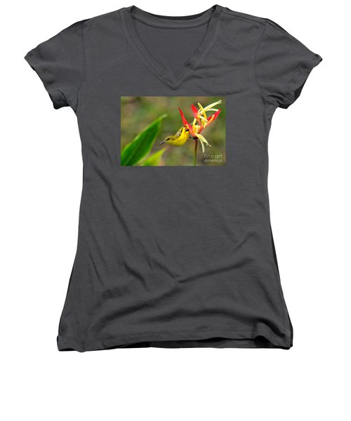 Female Olive Backed Sunbird Clings To Heliconia Plant Flower Singapore Women's V-Neck T-Shirt