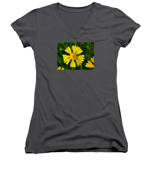 Wild Fine Leaved Sneezeweed Women's V-Neck T-Shirt (Junior Cut) by William Tanneberger