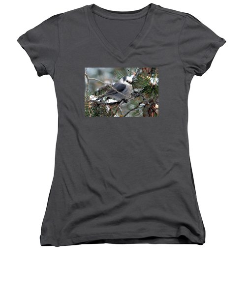 Gray Jay On A Snowy Pine Women's V-Neck (Athletic Fit)