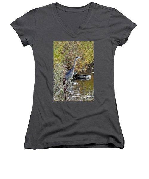 Great Blue Heron - Juvenile Women's V-Neck