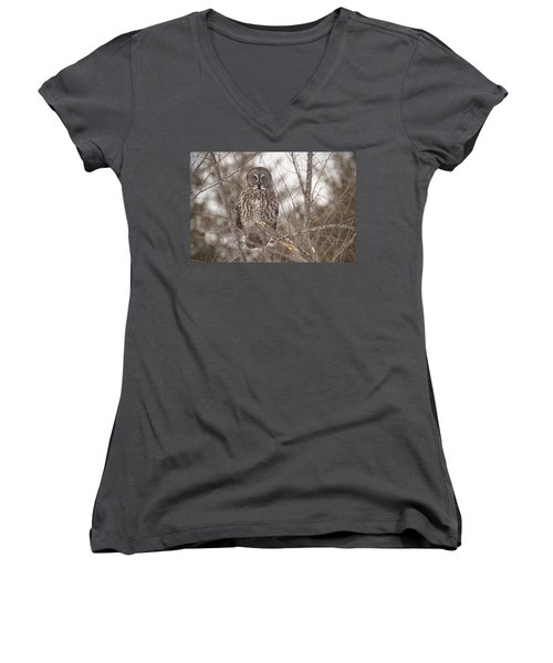 Great Grey Owl Women's V-Neck T-Shirt
