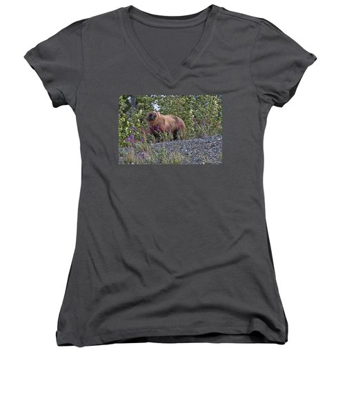 Grizzly Women's V-Neck T-Shirt (Junior Cut) by David Gleeson