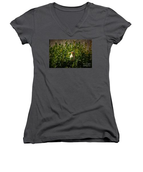 Women's V-Neck T-Shirt (Junior Cut) featuring the photograph Hide And Seek by Mariola Bitner