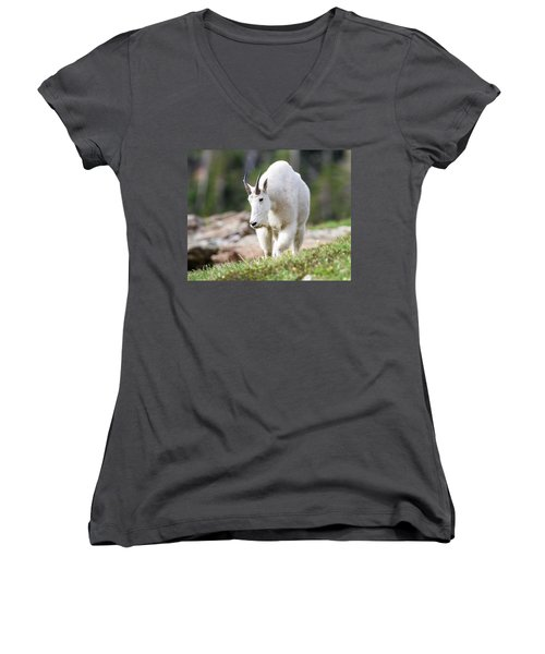Women's V-Neck T-Shirt (Junior Cut) featuring the photograph High Country Mountain Goat by Jack Bell