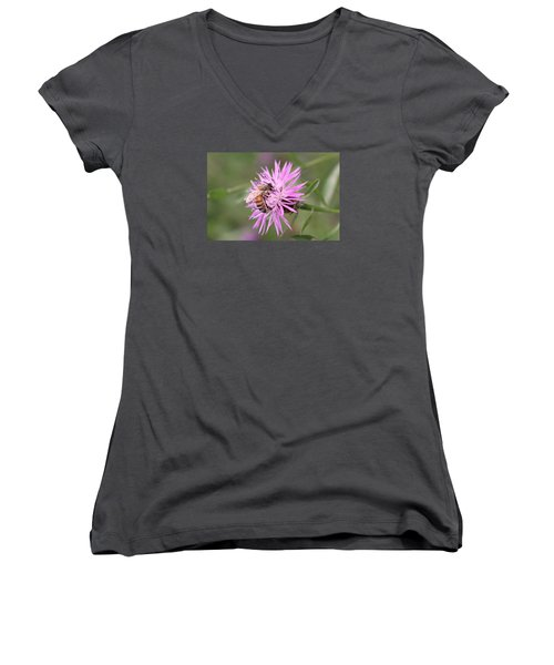 Honeybee On Ironweed Women's V-Neck T-Shirt (Junior Cut) by Lucinda VanVleck