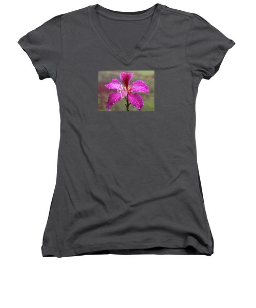 Hong Kong Orchid Tree Flower Women's V-Neck T-Shirt (Junior Cut) by Venetia Featherstone-Witty