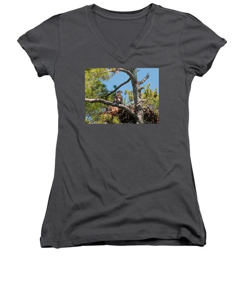 Immature Bald Eagle Women's V-Neck T-Shirt