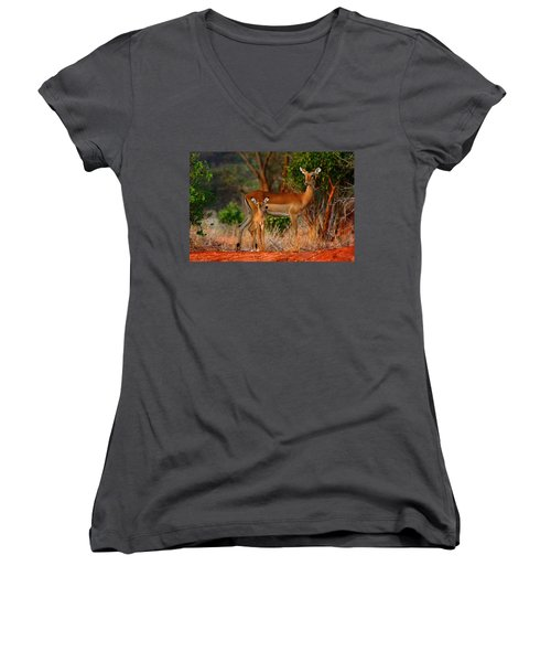 Impala And Young Women's V-Neck T-Shirt (Junior Cut) by Amanda Stadther