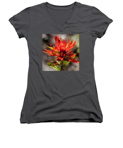 Women's V-Neck T-Shirt (Junior Cut) featuring the photograph Indian Paintbrush by Belinda Greb