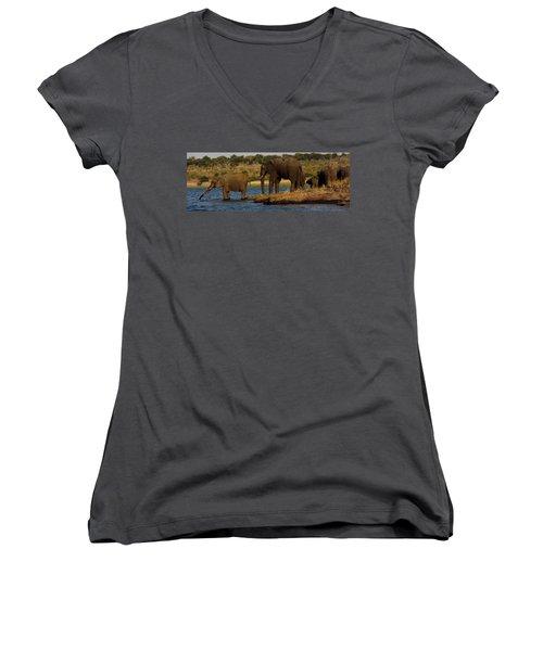 Women's V-Neck T-Shirt (Junior Cut) featuring the photograph Kalahari Elephants Preparing To Cross Chobe River by Amanda Stadther