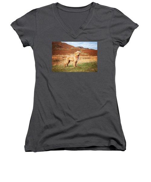 Labradoodle Puppy Women's V-Neck T-Shirt