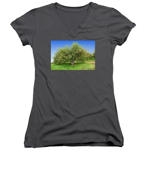 Large Apple Tree Women's V-Neck T-Shirt (Junior Cut) by Anthony Sacco
