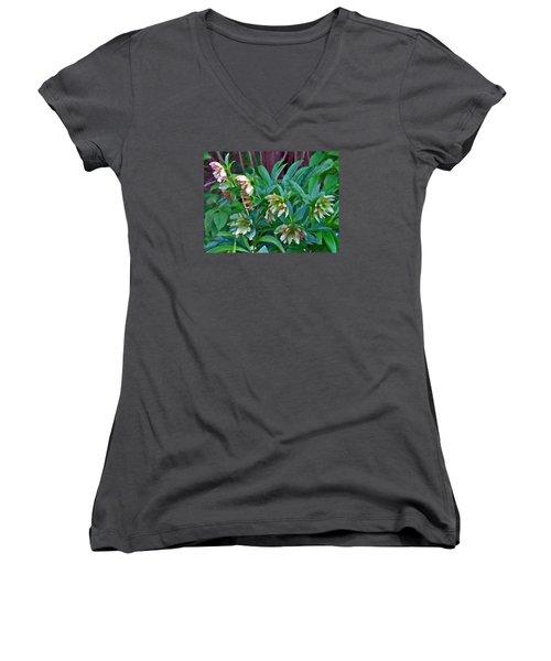 Lenten Roses Women's V-Neck T-Shirt