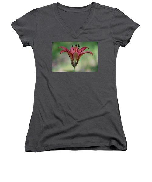 Lillium Philadelphicum Women's V-Neck T-Shirt