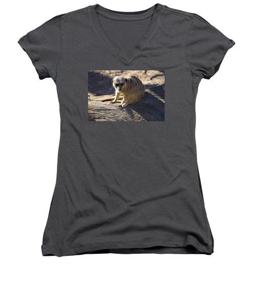 Meerkat Resting On A Rock Women's V-Neck T-Shirt (Junior Cut) by Chris Flees