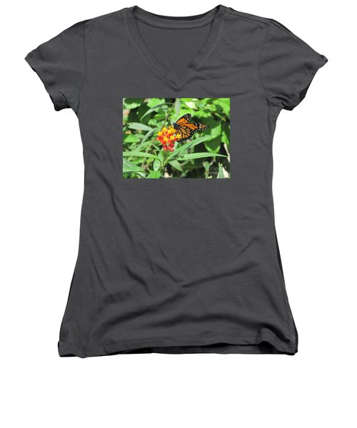 Monarch At Rest Women's V-Neck