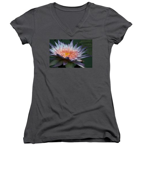 Nature's Baroque Women's V-Neck T-Shirt (Junior Cut) by Yvonne Wright