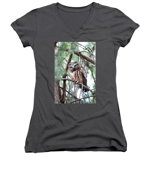 Northern Saw-whet Owl 2 Women's V-Neck T-Shirt