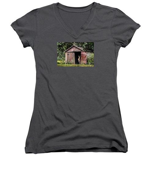 Old Gray Mare Women's V-Neck T-Shirt