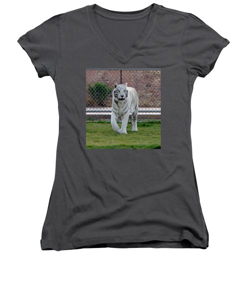 Out Of Africa White Tiger Women's V-Neck