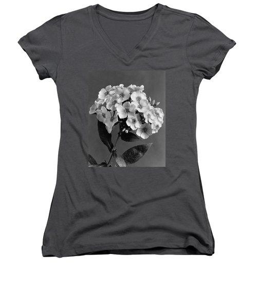 Phlox Blossoms Women's V-Neck