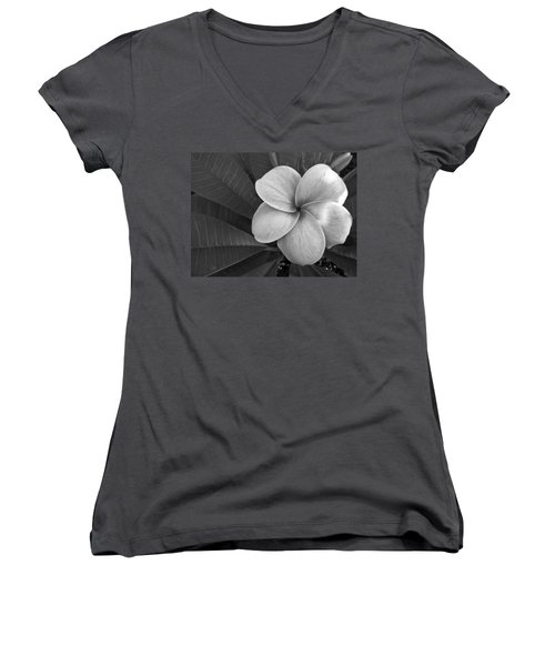 Plumeria With Raindrops Women's V-Neck