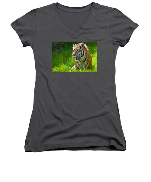 Portrait Of A Sumatran Tiger Women's V-Neck T-Shirt (Junior Cut) by Jeff Goulden