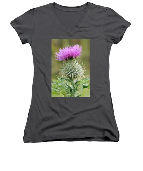 Purple Thistle Women's V-Neck T-Shirt (Junior Cut) by Jeremy Voisey