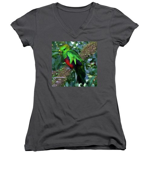 Quetzal Women's V-Neck