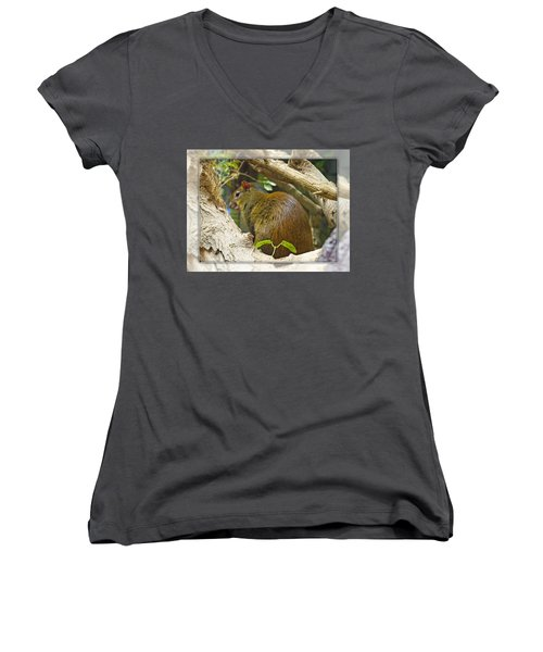 Red-rumped Agouti Women's V-Neck (Athletic Fit)