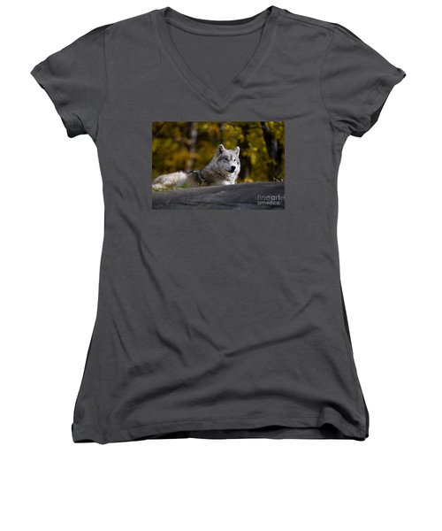 Women's V-Neck T-Shirt (Junior Cut) featuring the photograph Resting Arctic Wolf On Rocks by Wolves Only