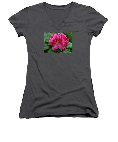 Rhododendron ' Bessie Howells ' Women's V-Neck T-Shirt (Junior Cut) by William Tanneberger