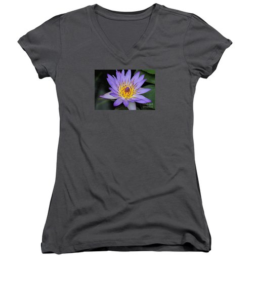 Royal Purple Water Lily #4 Women's V-Neck T-Shirt (Junior Cut) by Judy Whitton