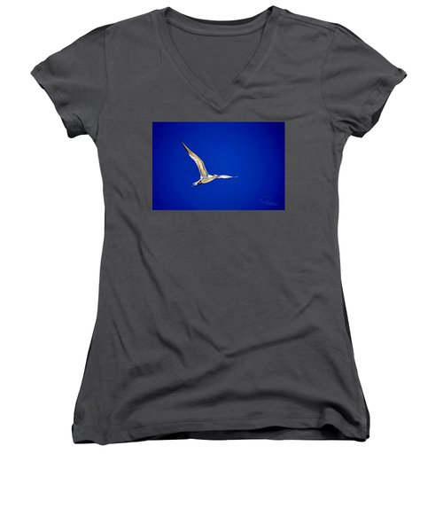 Royal Tern 2 Women's V-Neck T-Shirt (Junior Cut) by Ludwig Keck