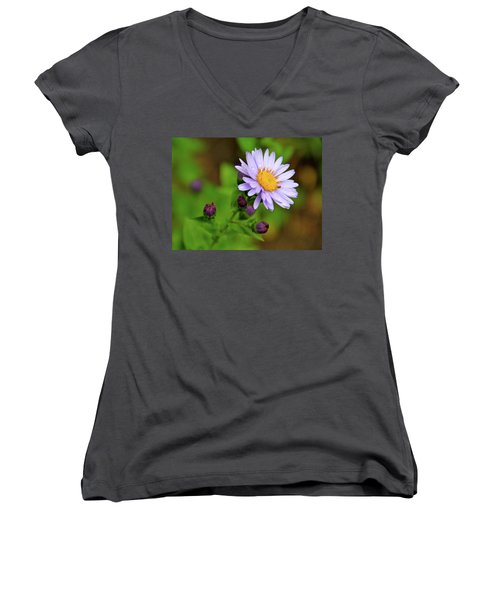 Showy Aster Women's V-Neck T-Shirt (Junior Cut) by Ed  Riche