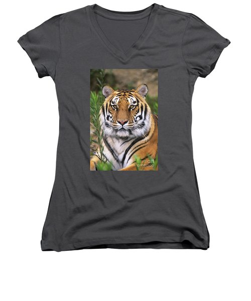 Siberian Tiger Staring Endangered Species Wildlife Rescue Women's V-Neck (Athletic Fit)